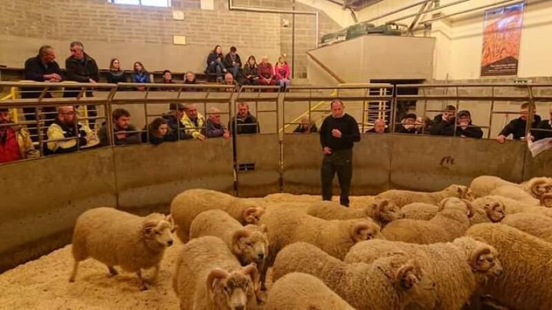 Lerwick - FLOCK BOOK - Sale of Rams - Saturday 25th September 2021