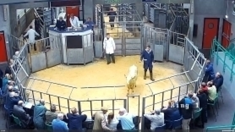 Weekly Sale of Cast Cows & Bulls, OTM Cattle followed by Prime Cattle in Ring 1.